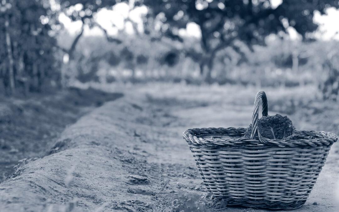 Consum i producció sostenibles