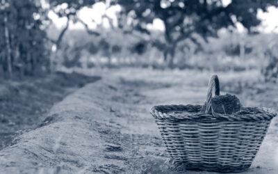 Consumo y producción sostenibles